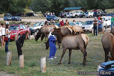 Elk Watching