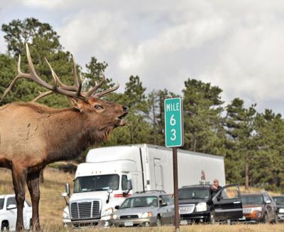 Watch For Wildlife On  Or Near The Roads