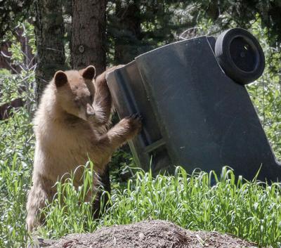 Bear With Trashcan