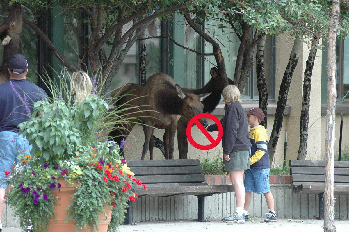 Don't Feed Wildlife – Woman with Elk