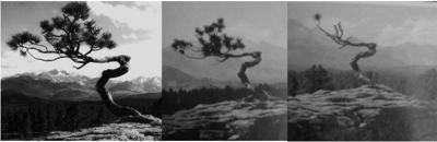 """Estes Park Archives Program On """"Lone Pine"""""""