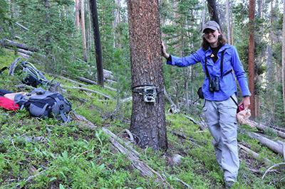 Study Investigates Wildlife Response to Bark Beetle Outbreaks