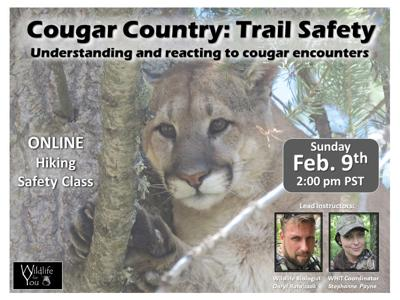Cougar Class