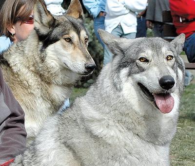 Hermit Park Wolves
