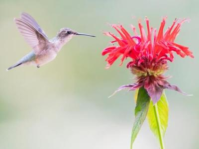 Tips to Attract Hummingbirds to Your Yard