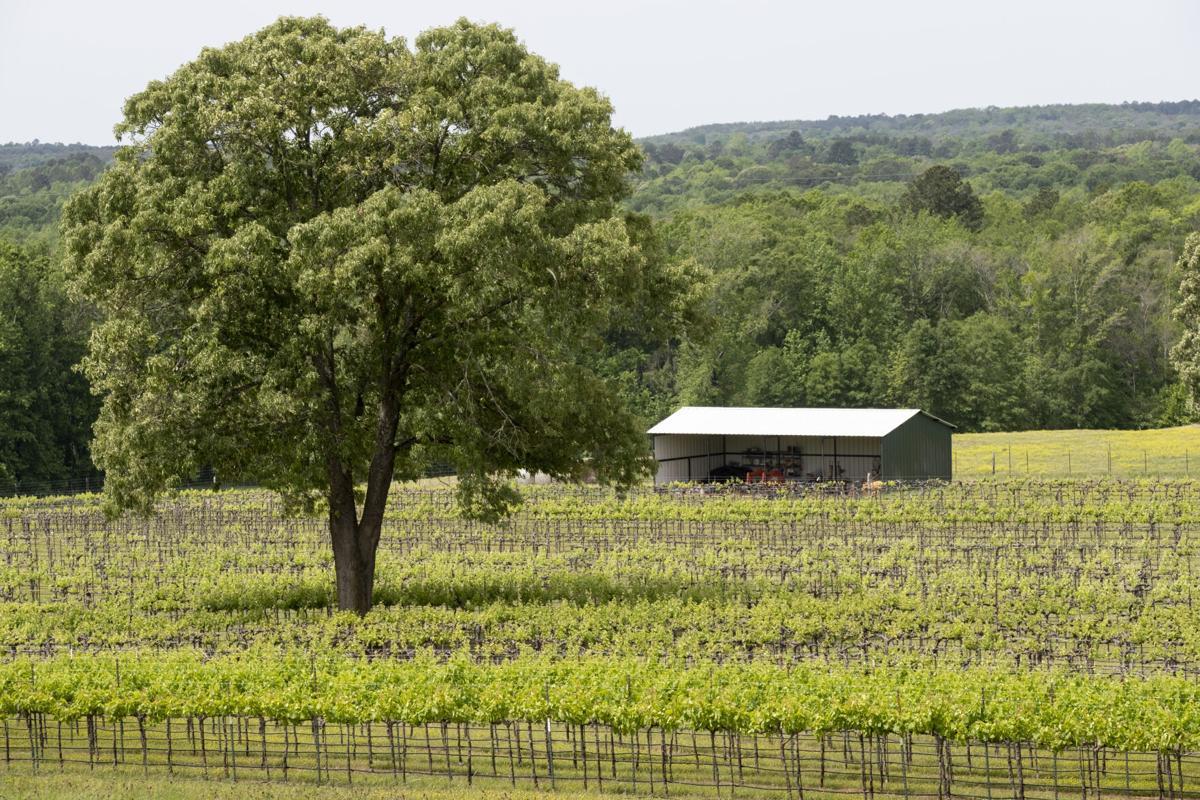 Pelle Legna Vineyards