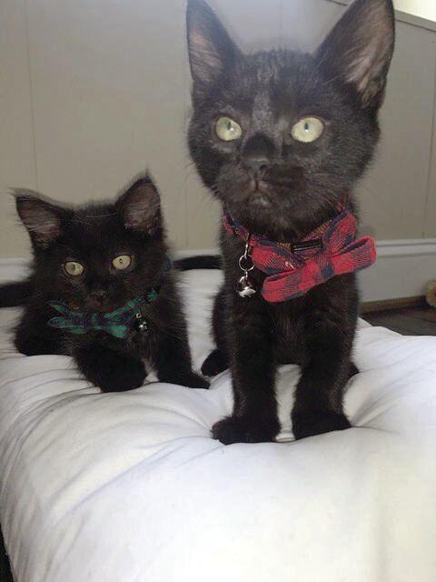 Bagheera & Baloo