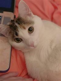 Homeless Animals Rescue Team - Olivia.jpg