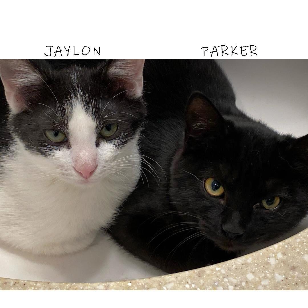 HART - Jaylon and Parker.jpg