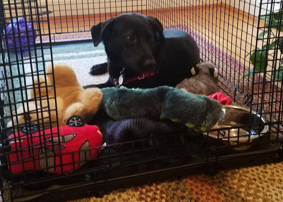 Lab Rescue - Sorry Ginny- No toys  in Crate.jpg