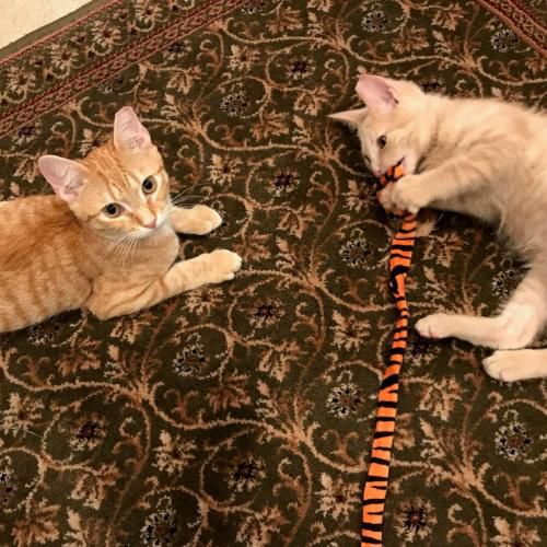 PetConnect  Rescue - Bonnie and Clyde1.jpg