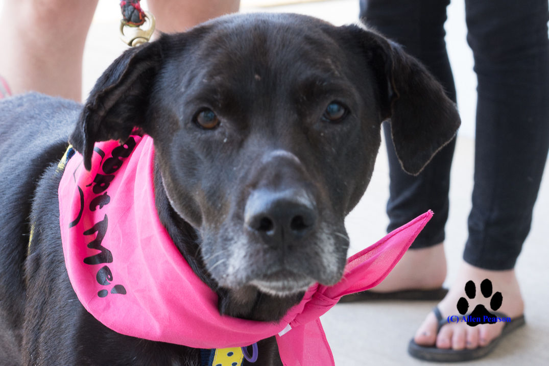 Operation Paws for Homes - Bahama Momma2.jpg