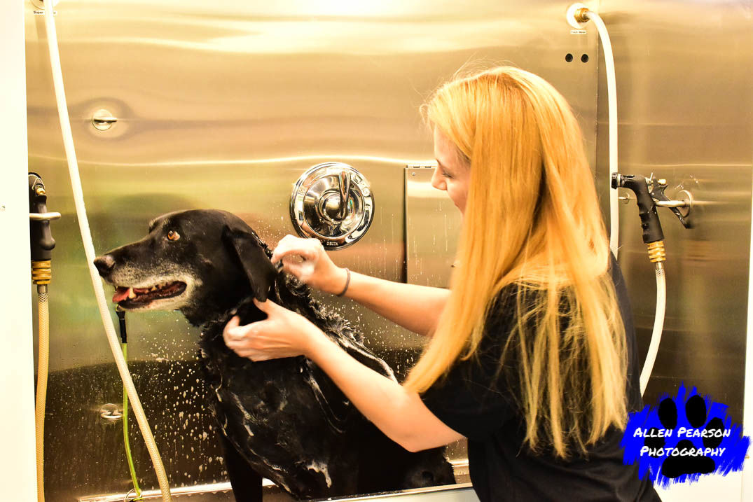 Allen Pearson Photography - Noah with Woofies Groomer1.jpg