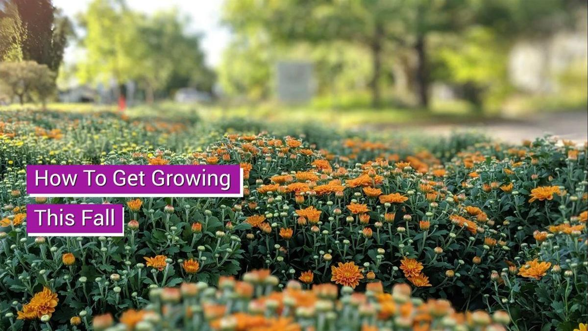Get Growing