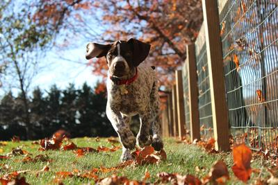 Puppy Running in Backyard