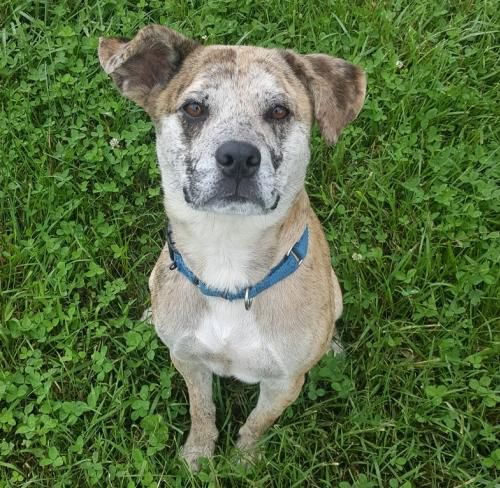 PetConnect Rescue - Sparky1.jpg