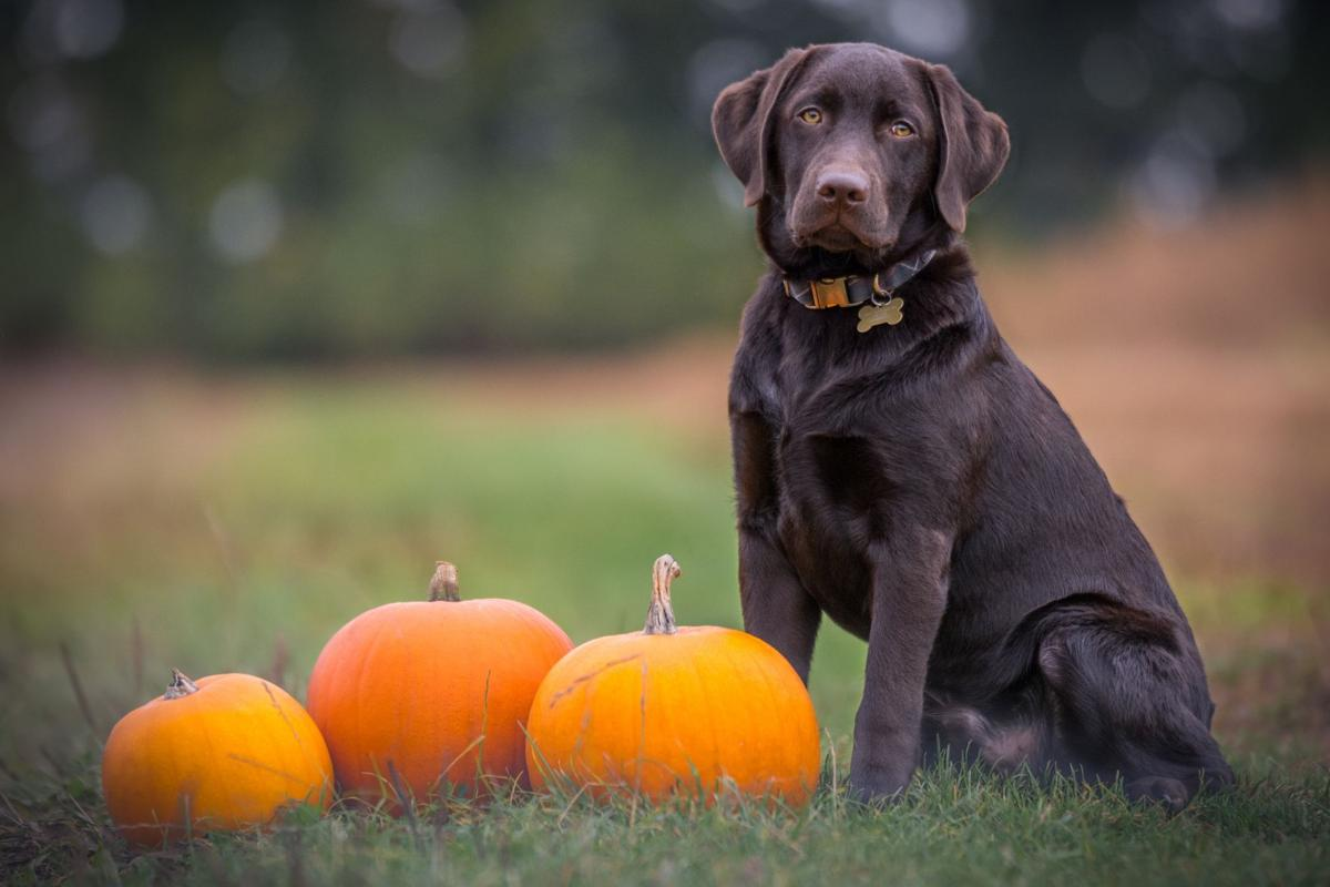 Ben Hanson, Unsplash - Dog with Pumpkins.jpg