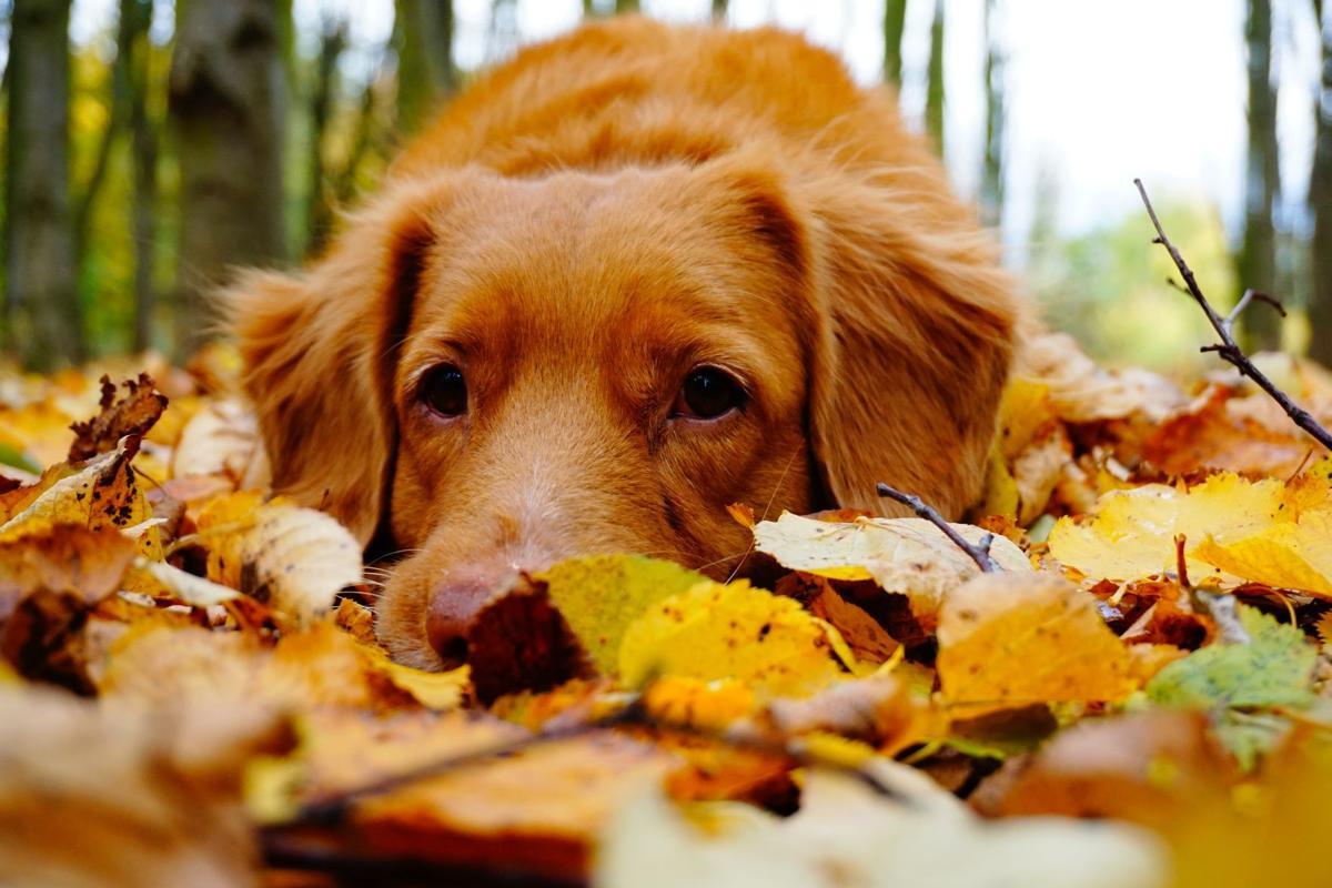 Tereza Hoskova, Unsplash - Dog in Falls Leaves.jpg