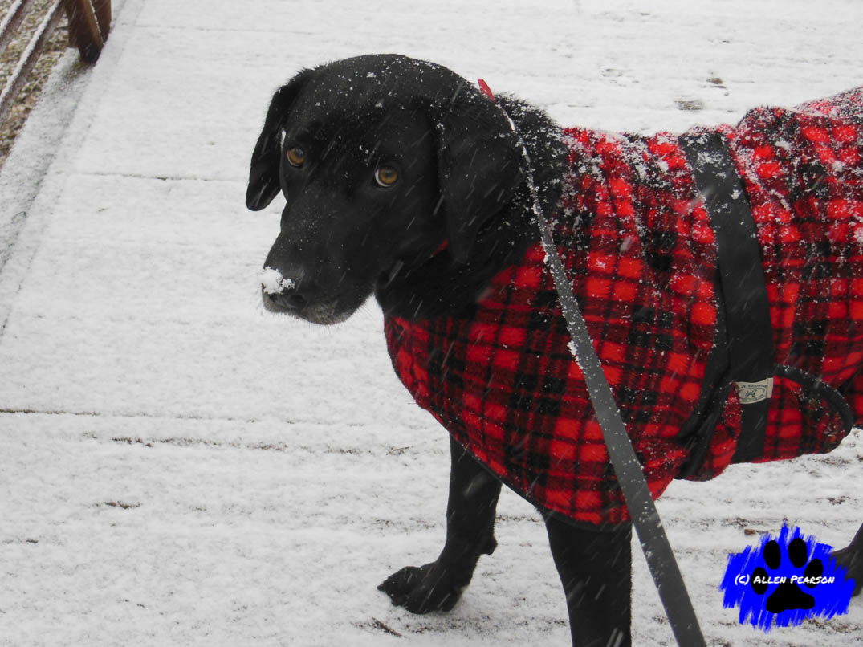 Allen Pearson Photography - Noah and Winter Coat2.JPG
