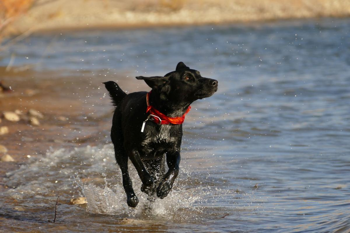 yuki-dog-437452-unsplash - Dog Splashes at Beach.jpg