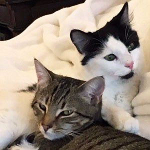 PetConnect Rescue - Butter Bean and Oscar1.jpg