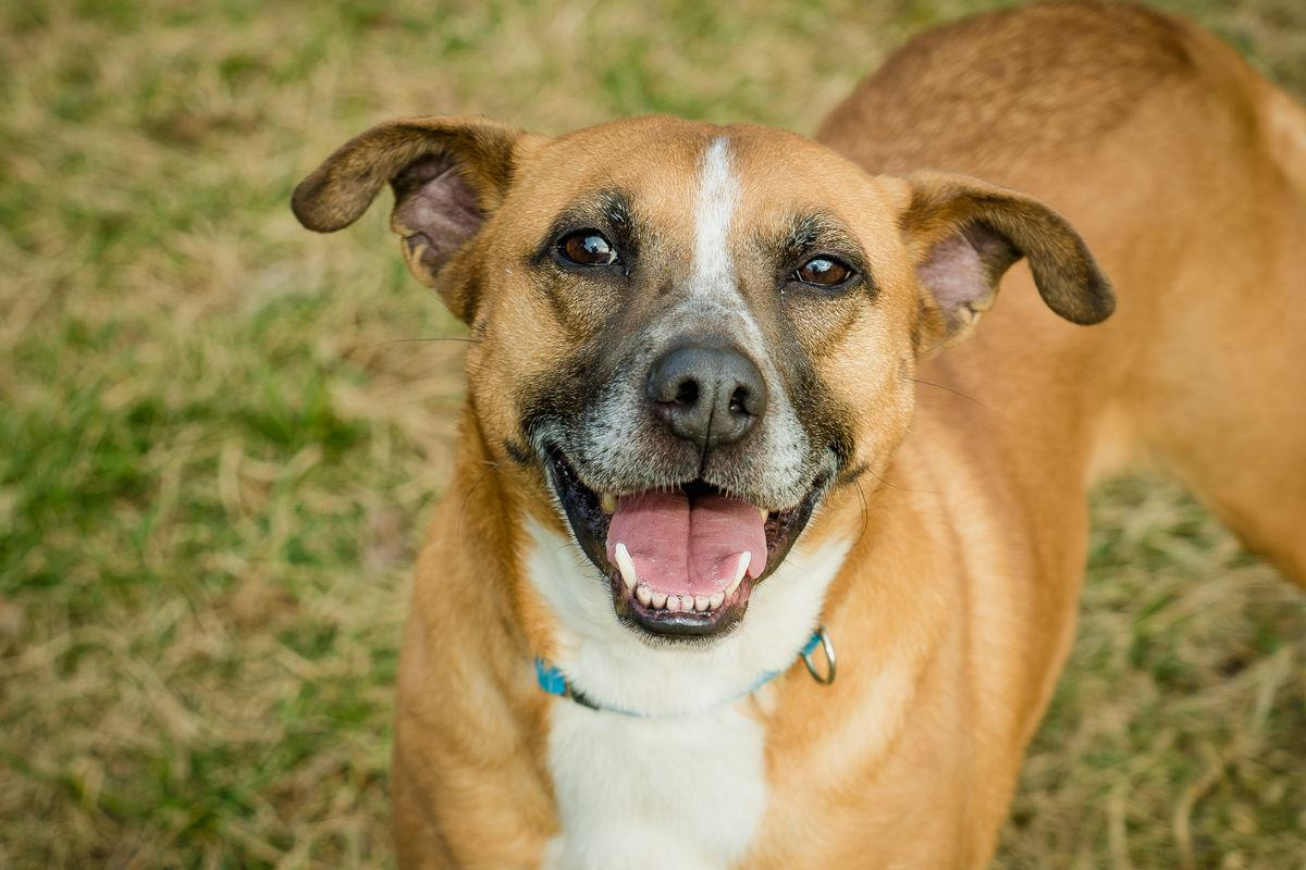 Operation Paws for Homes - Bella1.jpg