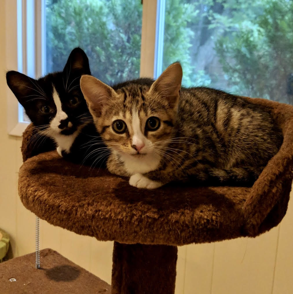 PetConnect Rescue - Georgia and Gertrude.jpg