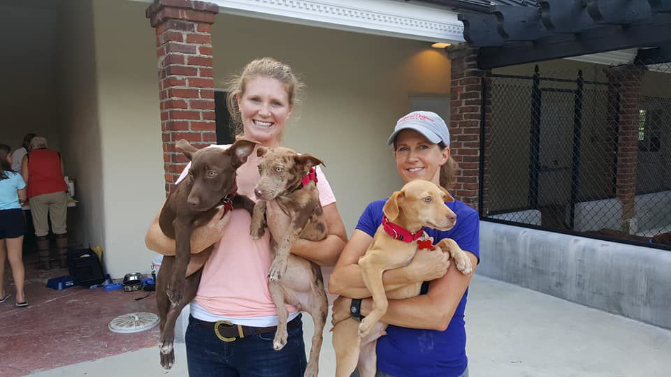 PetConnect Rescue - Hurricane Florence Rescue3.jpg