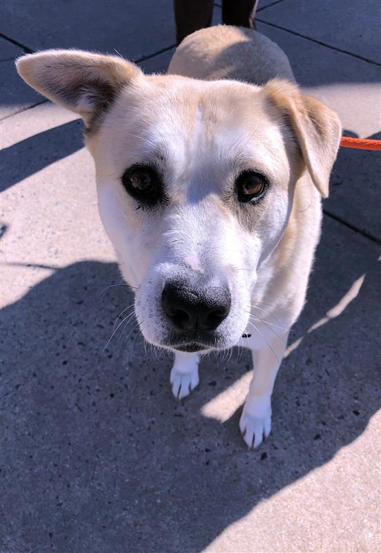 Homeless Animals Rescue Team - Blakes1.jpg