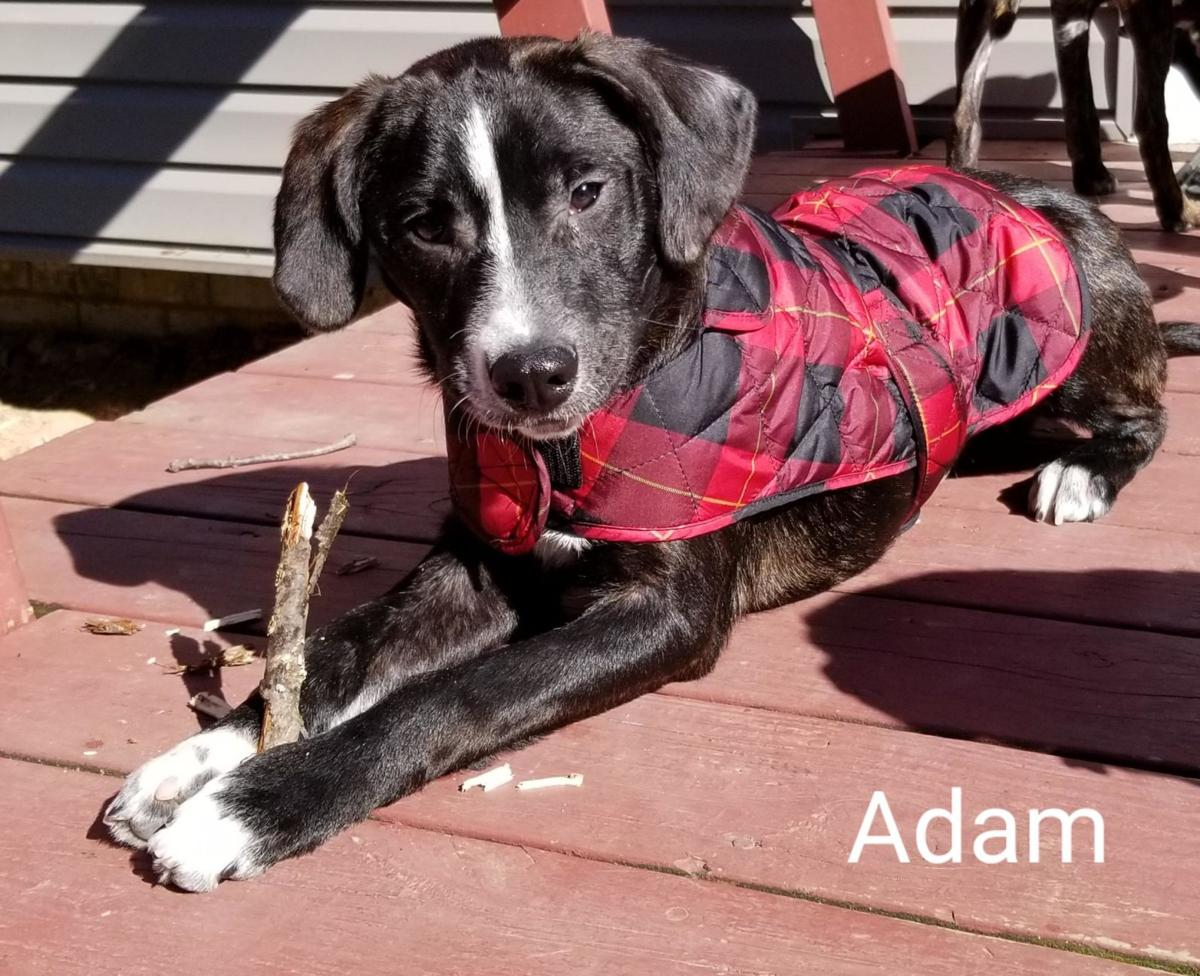 Healing Hearts Animal Rescue Group -  Adam.jpg