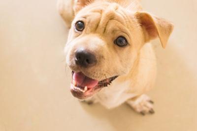 Leohoho - Smiling Puppy.jpg