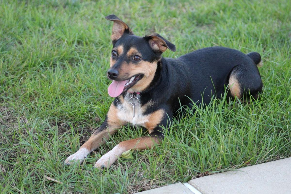 Operation Paws for Homes - Maganee Blue1.jpg