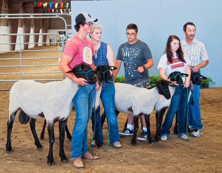 Conner Klick Shows Sheep at State Fair