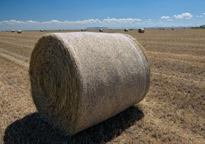 MDA Expanding Hay Lottery, Taking Donations