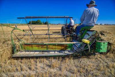 Binding Wheat in Choteau