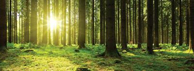 Sympathy Stock Image, Trees, 1000 pixel