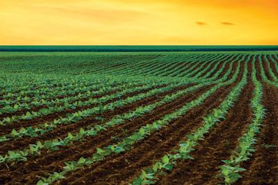 Seedling farm photo