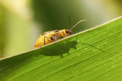 Don't count on low insect pressure again this season
