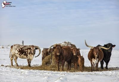 Animals' energy needs increase as subfreezing temps linger