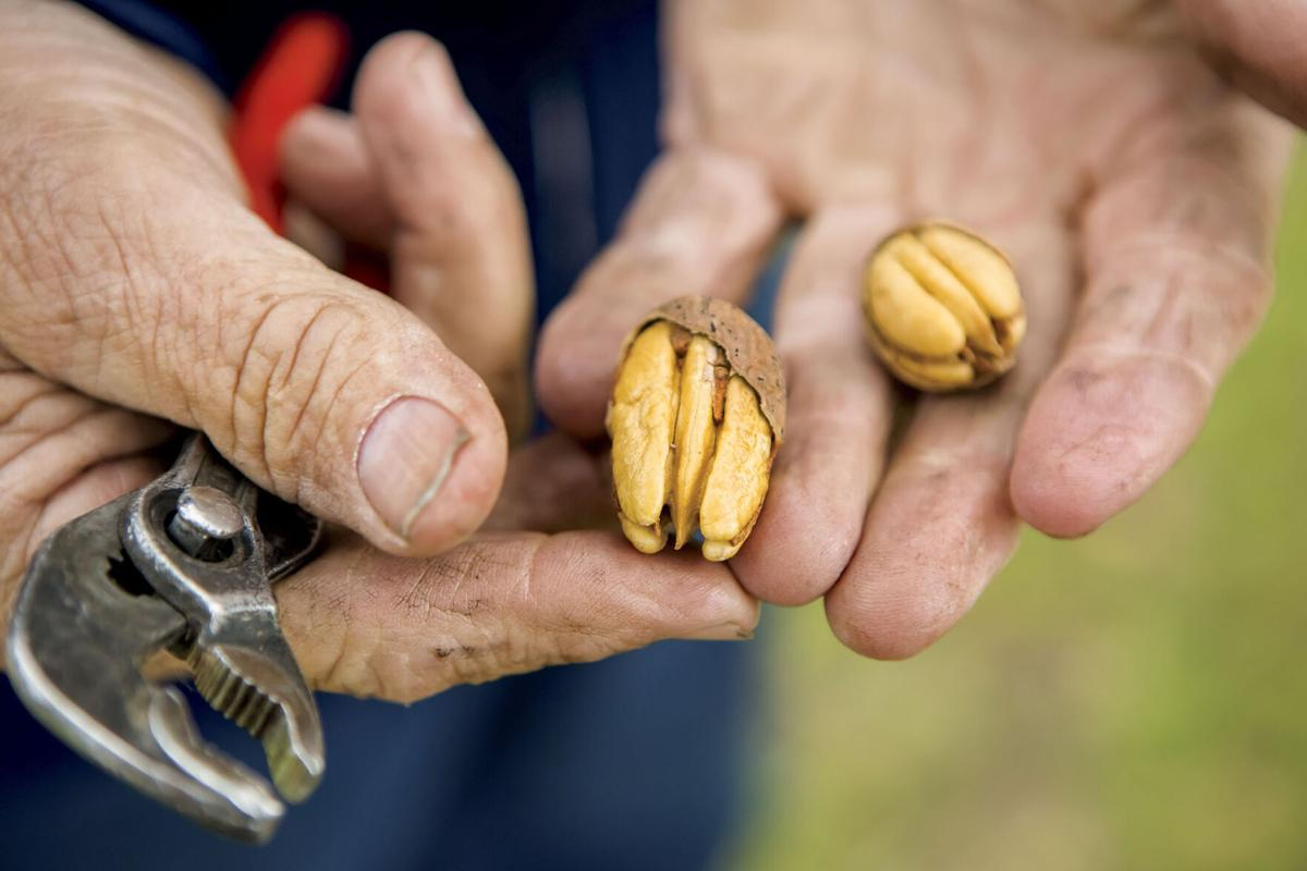 Consumers go nuts fro Clinton County pecans this year