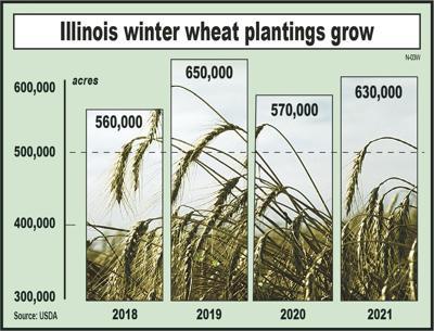 Winter wheat seedings rebound from year ago
