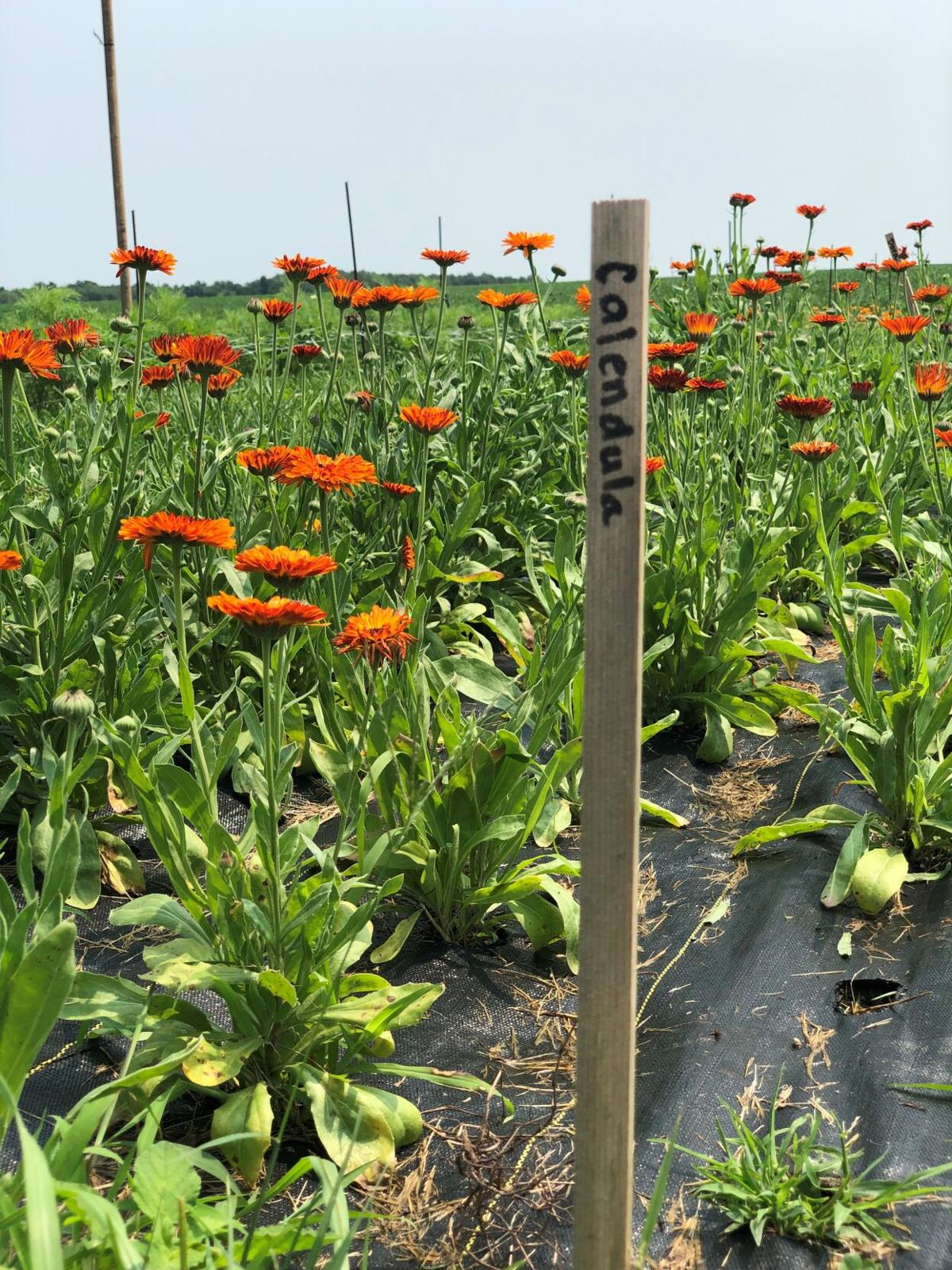 Farming, flowers meet in the middle