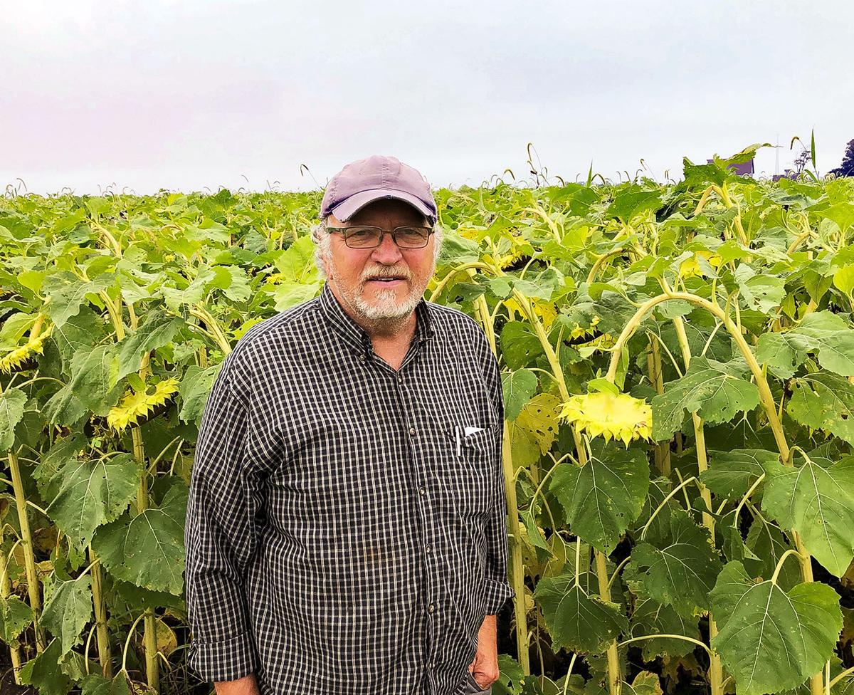 Sunflowers rise to new heights in Piatt County farmer's rotation