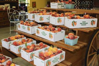 Peaches plentiful as summer season ramps up