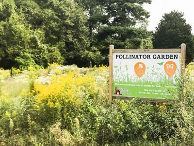 Farm Bureau pollinator projects flourish
