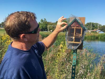 Bees keep IFB's prairie plants buzzing
