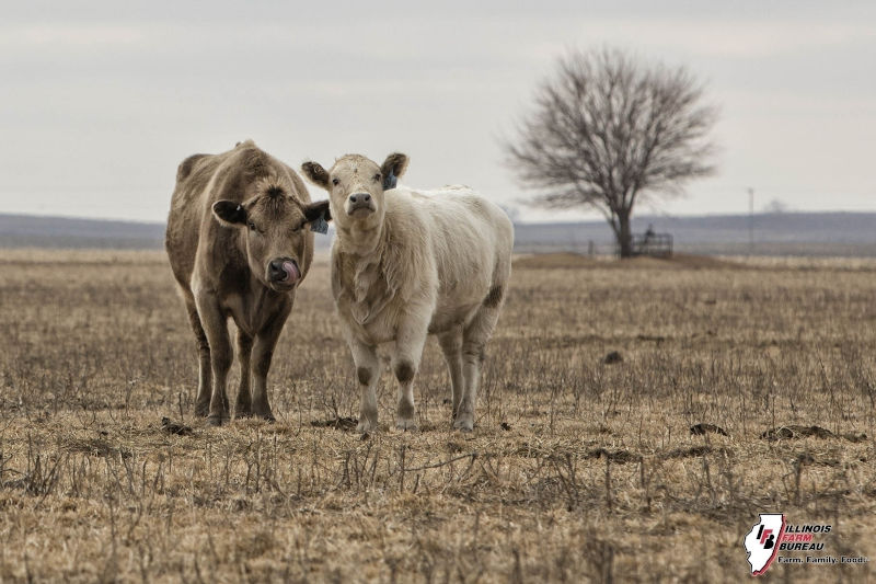 Educator provides winter cattle care, feed tips and BQA update