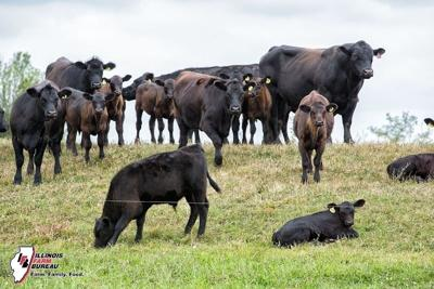 IMPA urges livestock farmers to register premises ID
