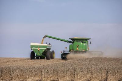 Woodford harvest