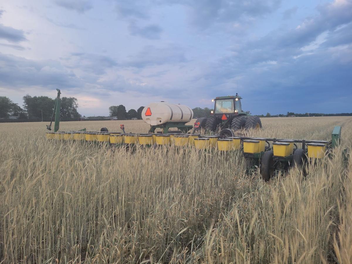 CropWatchers 2.0: Crops taking hits like Rocky Balboa